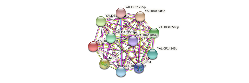 XP_505532.1 protein (Yarrowia lipolytica) - STRING interaction network