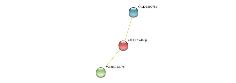 XP_505537.1 protein (Yarrowia lipolytica) - STRING interaction network