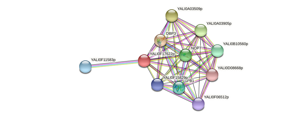 XP_505544.1 protein (Yarrowia lipolytica) - STRING interaction network