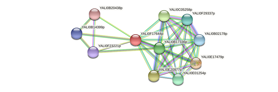 XP_505545.1 protein (Yarrowia lipolytica) - STRING interaction network
