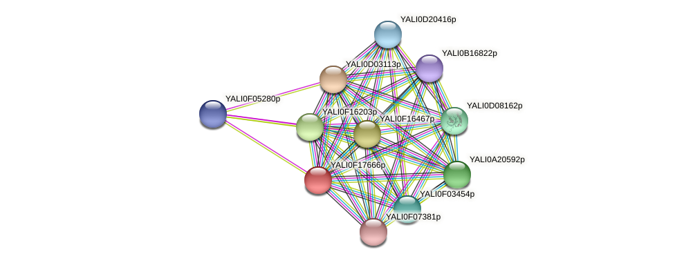 XP_505546.1 protein (Yarrowia lipolytica) - STRING interaction network