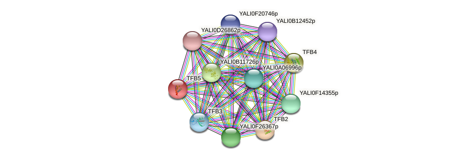 TFB5 protein (Yarrowia lipolytica) - STRING interaction network
