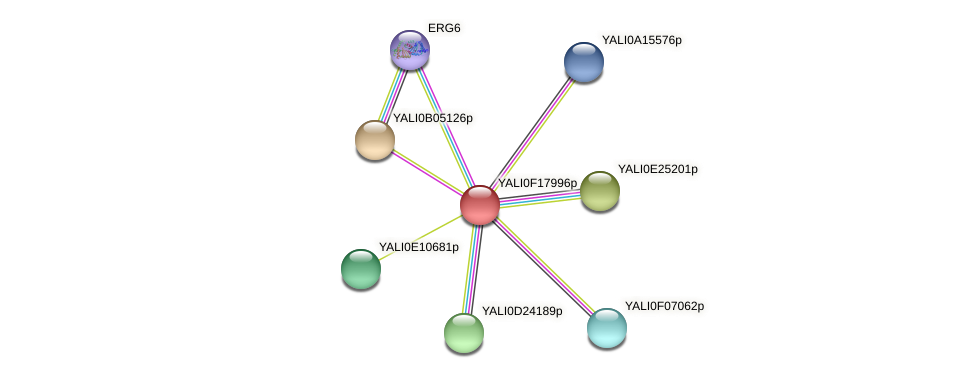 XP_505559.1 protein (Yarrowia lipolytica) - STRING interaction network