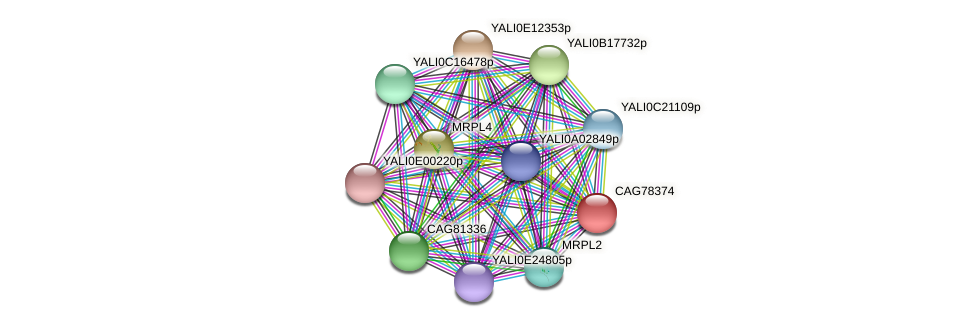 XP_505565.1 protein (Yarrowia lipolytica) - STRING interaction network