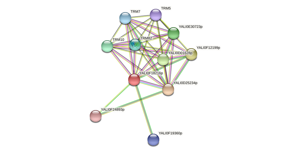 XP_505568.1 protein (Yarrowia lipolytica) - STRING interaction network