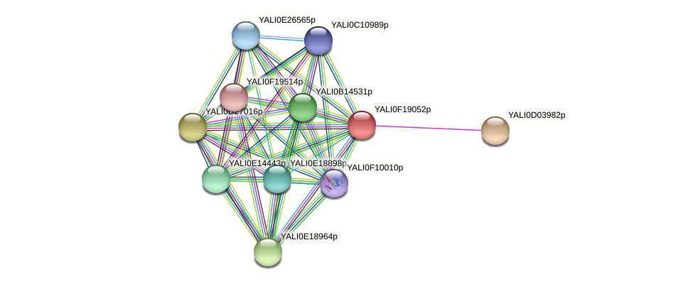 XP_505604.1 protein (Yarrowia lipolytica) - STRING interaction network