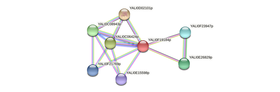XP_505610.1 protein (Yarrowia lipolytica) - STRING interaction network