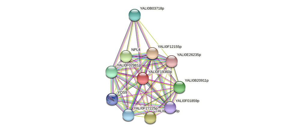 XP_505617.1 protein (Yarrowia lipolytica) - STRING interaction network