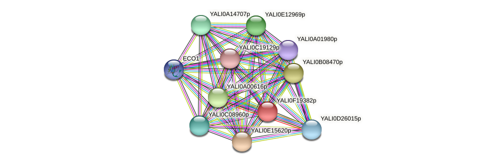 XP_505618.1 protein (Yarrowia lipolytica) - STRING interaction network