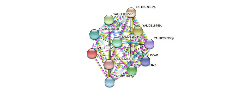 XP_505620.1 protein (Yarrowia lipolytica) - STRING interaction network