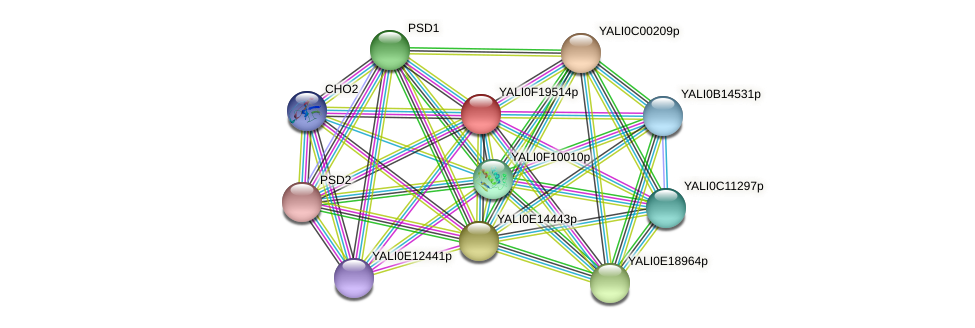 XP_505624.1 protein (Yarrowia lipolytica) - STRING interaction network