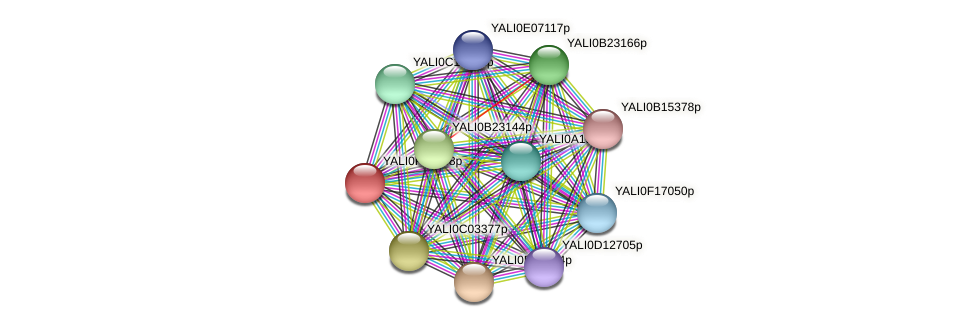 XP_505626.1 protein (Yarrowia lipolytica) - STRING interaction network