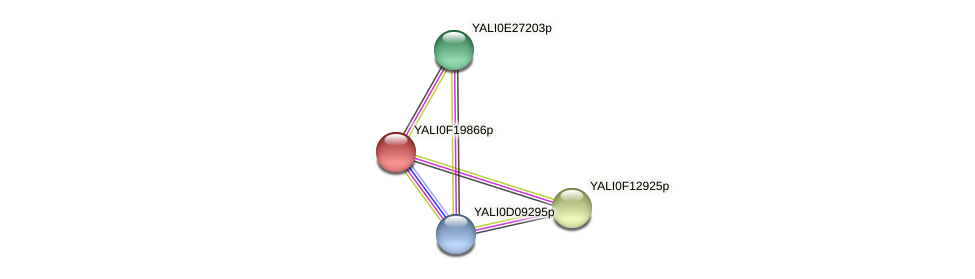 XP_505640.1 protein (Yarrowia lipolytica) - STRING interaction network