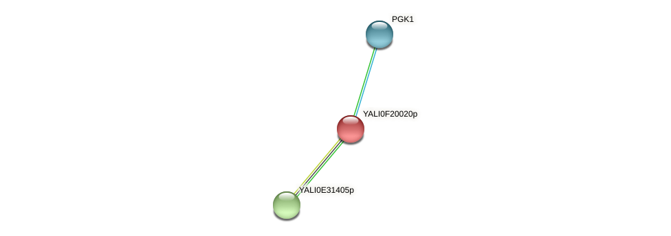 XP_505645.1 protein (Yarrowia lipolytica) - STRING interaction network