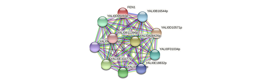 FEN1 protein (Yarrowia lipolytica) - STRING interaction network