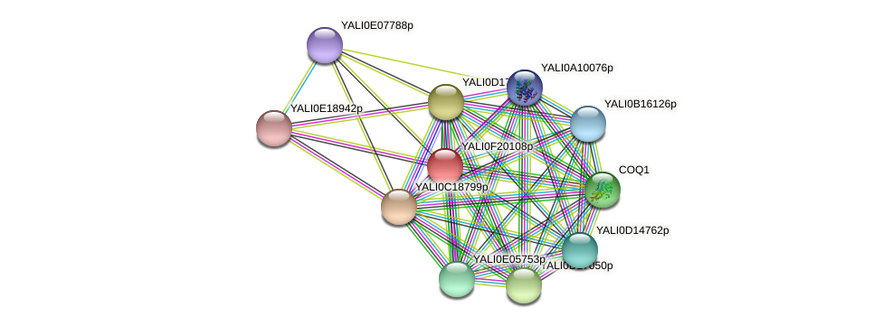 XP_505648.1 protein (Yarrowia lipolytica) - STRING interaction network