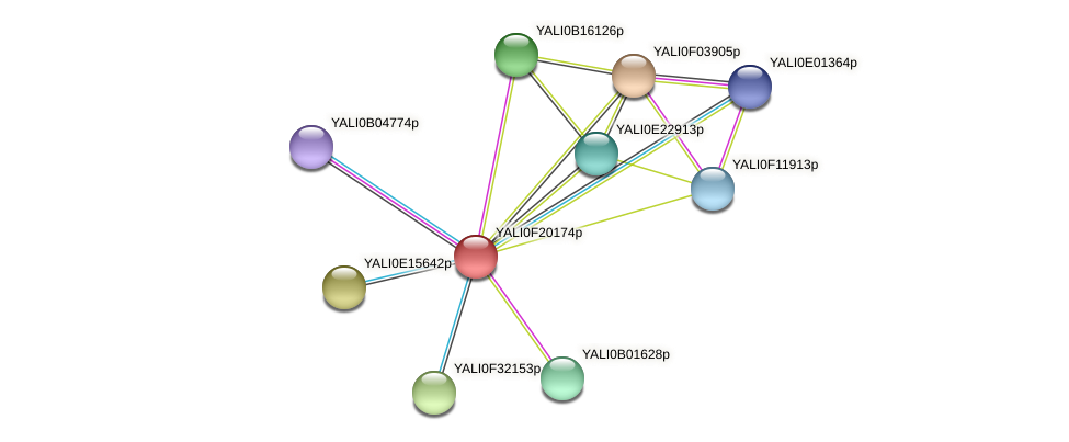 XP_505651.1 protein (Yarrowia lipolytica) - STRING interaction network