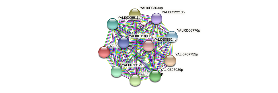 XP_505654.1 protein (Yarrowia lipolytica) - STRING interaction network