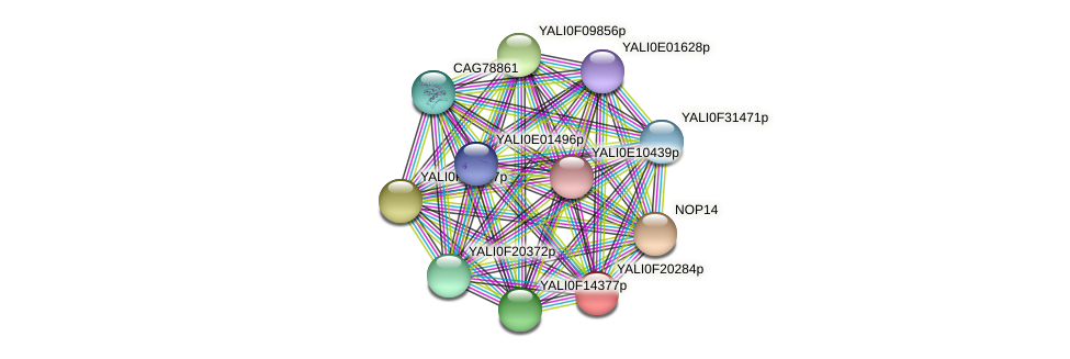 XP_505656.1 protein (Yarrowia lipolytica) - STRING interaction network