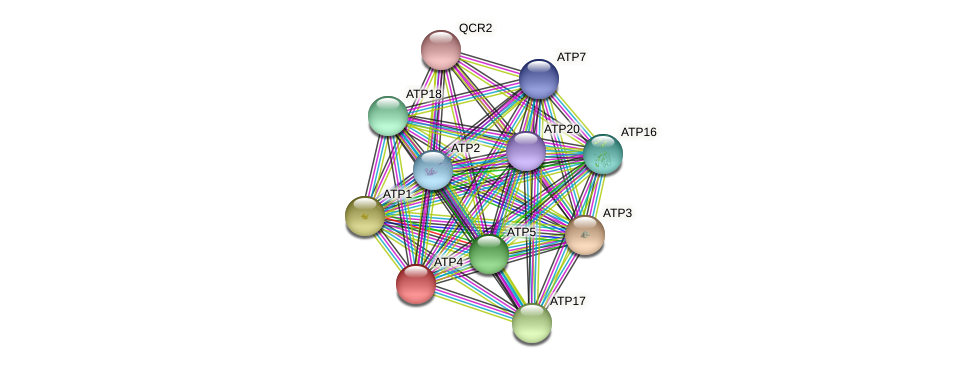 XP_505657.1 protein (Yarrowia lipolytica) - STRING interaction network
