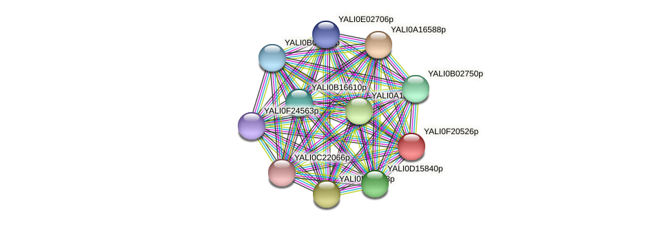 XP_505667.1 protein (Yarrowia lipolytica) - STRING interaction network