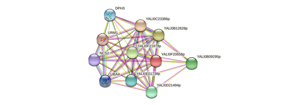 XP_505673.1 protein (Yarrowia lipolytica) - STRING interaction network