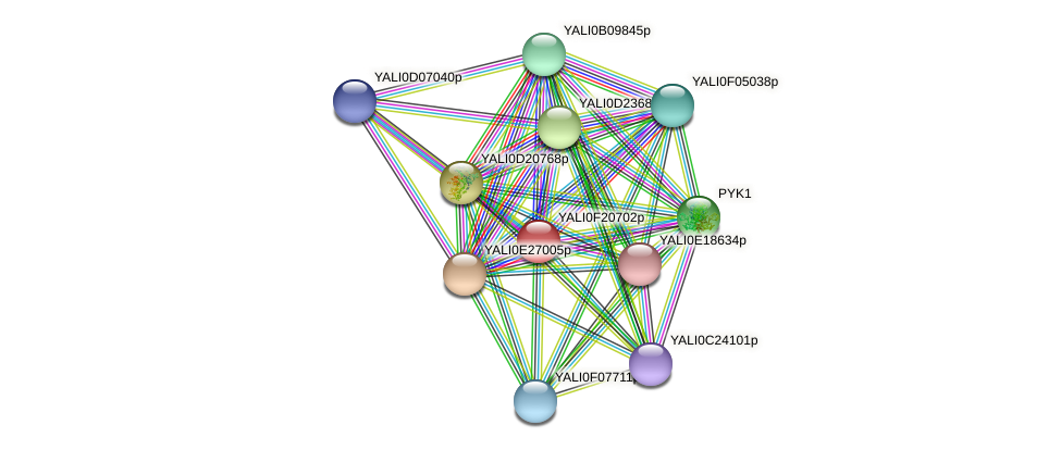 XP_505675.1 protein (Yarrowia lipolytica) - STRING interaction network