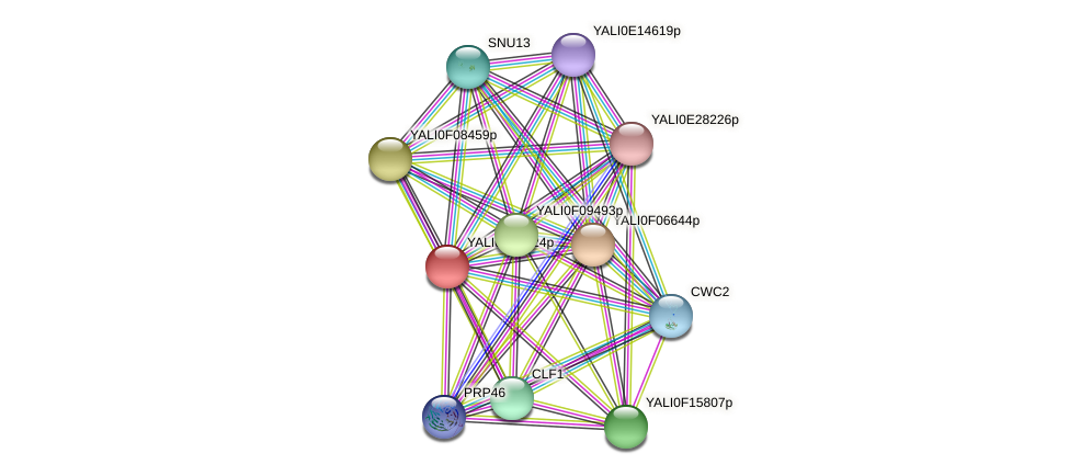 XP_505676.1 protein (Yarrowia lipolytica) - STRING interaction network