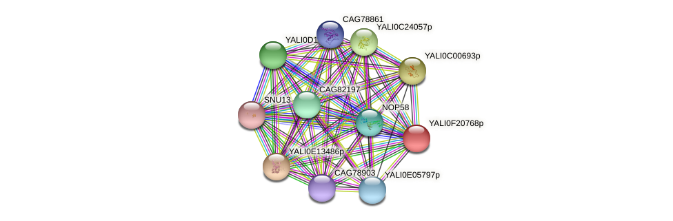 XP_505678.1 protein (Yarrowia lipolytica) - STRING interaction network