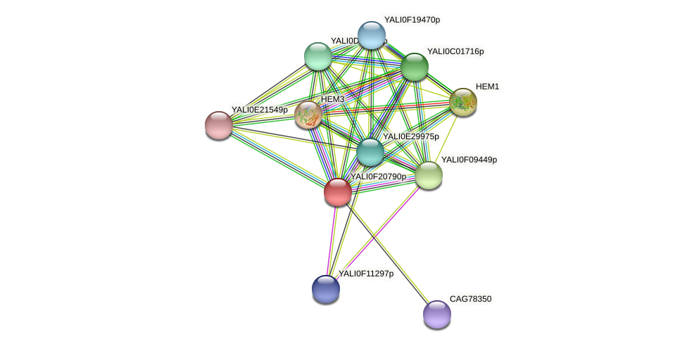 XP_505679.1 protein (Yarrowia lipolytica) - STRING interaction network