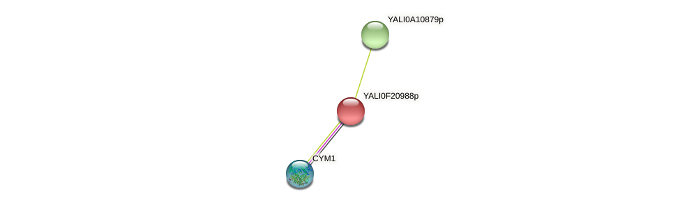XP_505688.1 protein (Yarrowia lipolytica) - STRING interaction network
