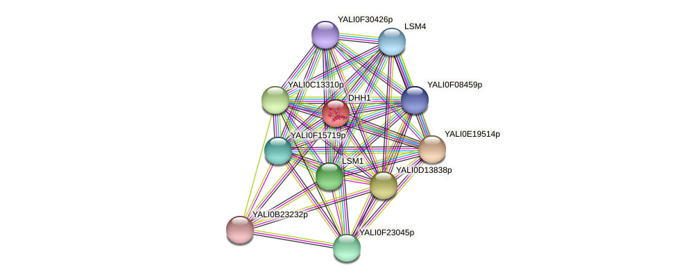 DHH1 protein (Yarrowia lipolytica) - STRING interaction network