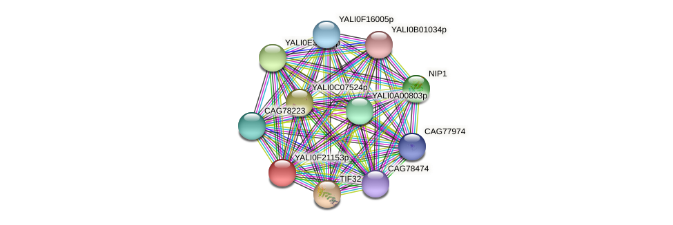 XP_505696.2 protein (Yarrowia lipolytica) - STRING interaction network