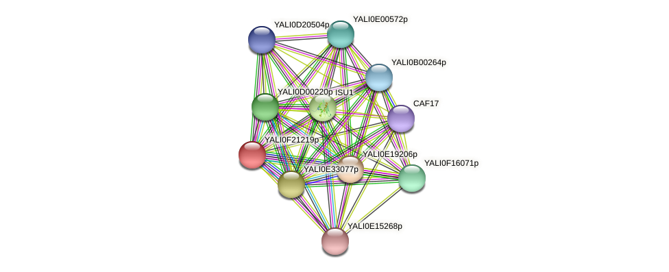 XP_505699.1 protein (Yarrowia lipolytica) - STRING interaction network