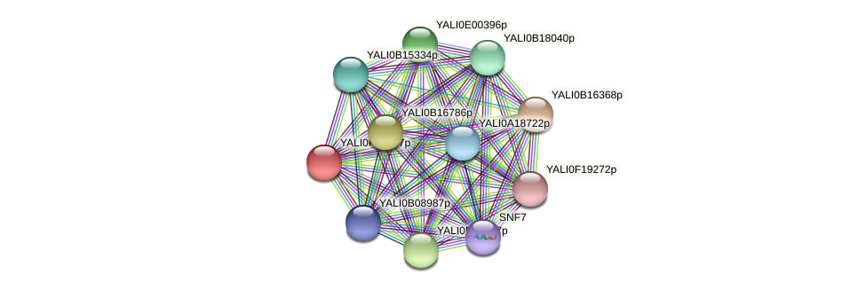 XP_505703.1 protein (Yarrowia lipolytica) - STRING interaction network