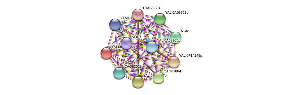 XP_505710.1 protein (Yarrowia lipolytica) - STRING interaction network