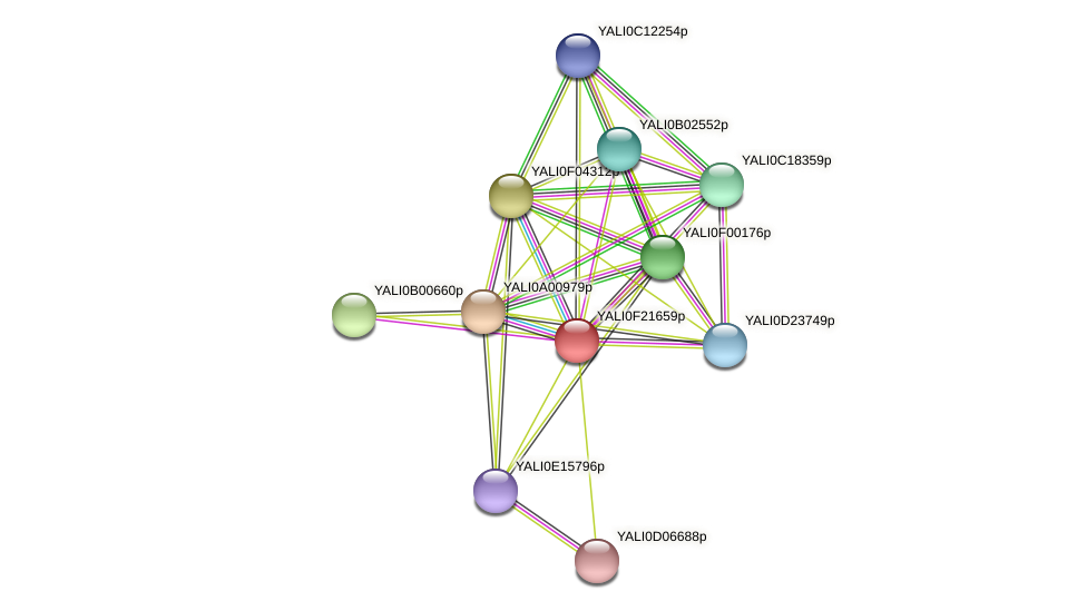 XP_505716.1 protein (Yarrowia lipolytica) - STRING interaction network