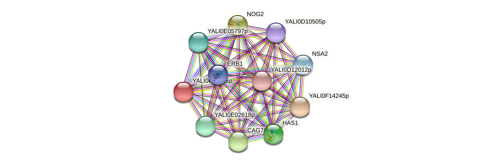 XP_505719.1 protein (Yarrowia lipolytica) - STRING interaction network
