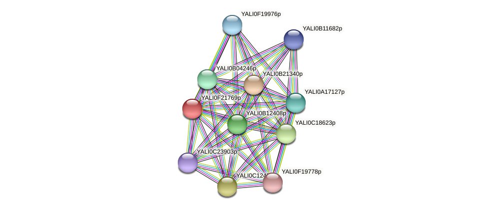 XP_505721.1 protein (Yarrowia lipolytica) - STRING interaction network