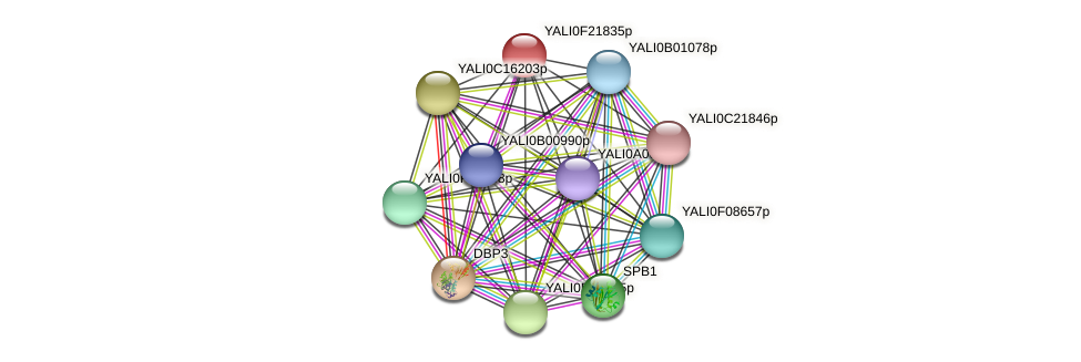 XP_505724.1 protein (Yarrowia lipolytica) - STRING interaction network