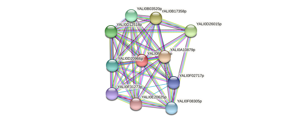 XP_505727.1 protein (Yarrowia lipolytica) - STRING interaction network