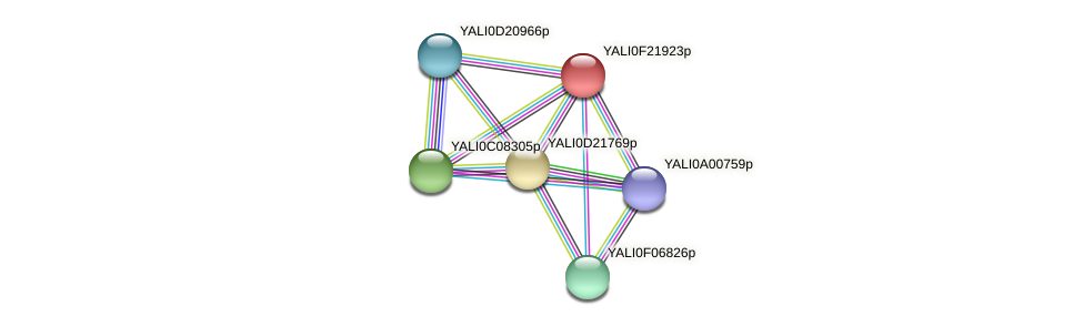 XP_505728.1 protein (Yarrowia lipolytica) - STRING interaction network