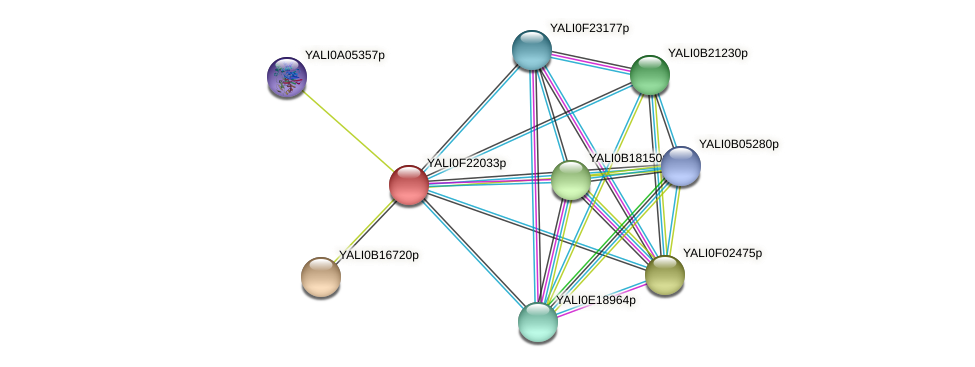 XP_505733.1 protein (Yarrowia lipolytica) - STRING interaction network