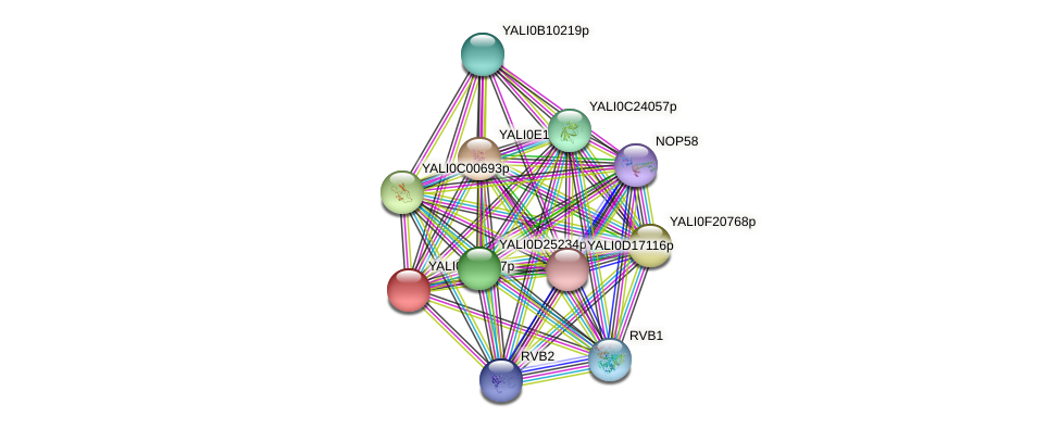 XP_505735.1 protein (Yarrowia lipolytica) - STRING interaction network
