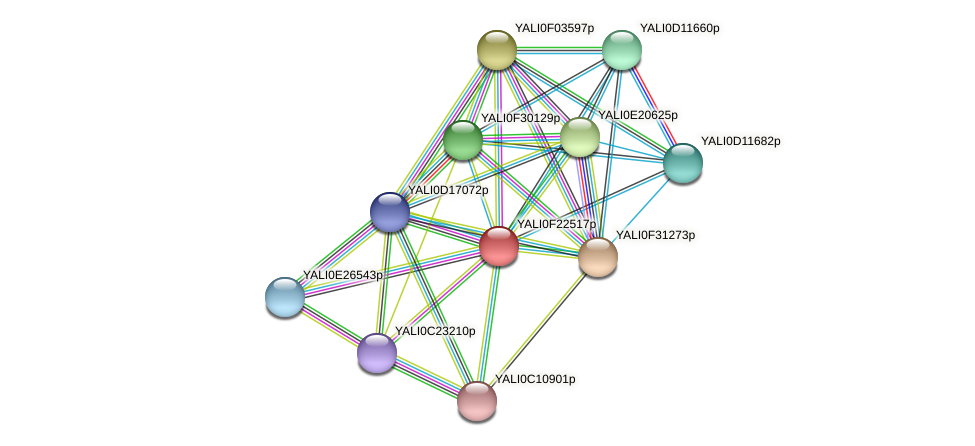 XP_505753.2 protein (Yarrowia lipolytica) - STRING interaction network