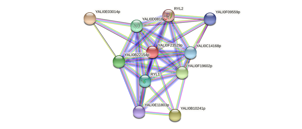 XP_505792.1 protein (Yarrowia lipolytica) - STRING interaction network