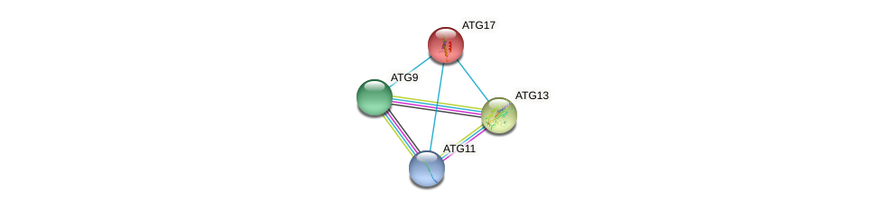ATG17 protein (Yarrowia lipolytica) - STRING interaction network