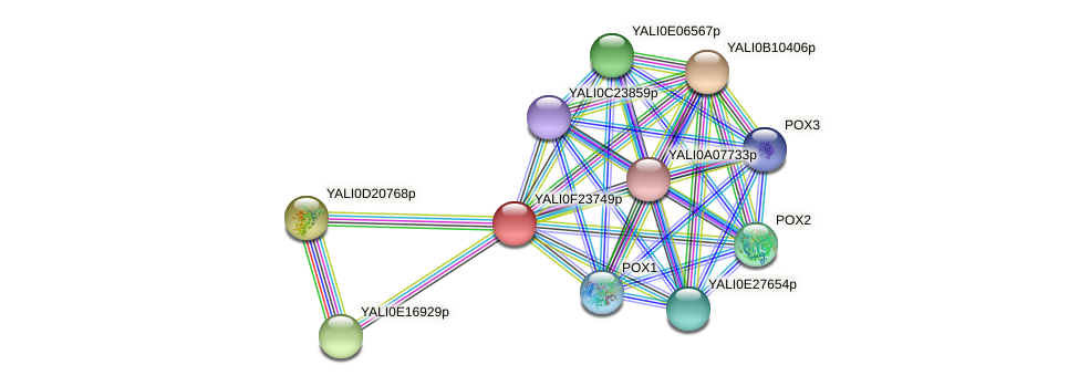 XP_505801.1 protein (Yarrowia lipolytica) - STRING interaction network