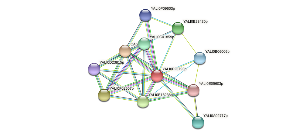 XP_505802.1 protein (Yarrowia lipolytica) - STRING interaction network