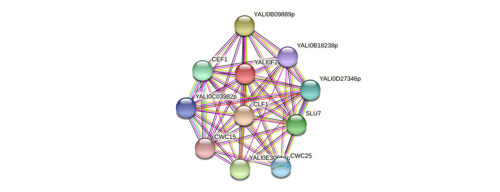 XP_505825.1 protein (Yarrowia lipolytica) - STRING interaction network